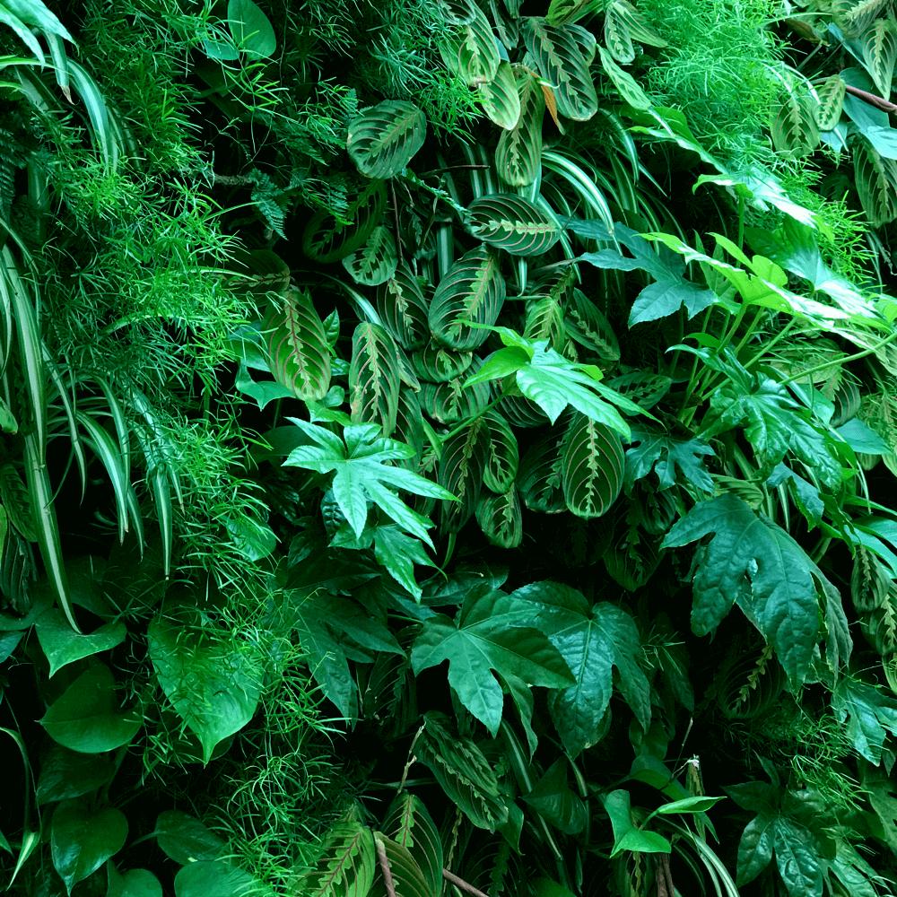 Peddelen langs inspiratie voor de verticale tuin