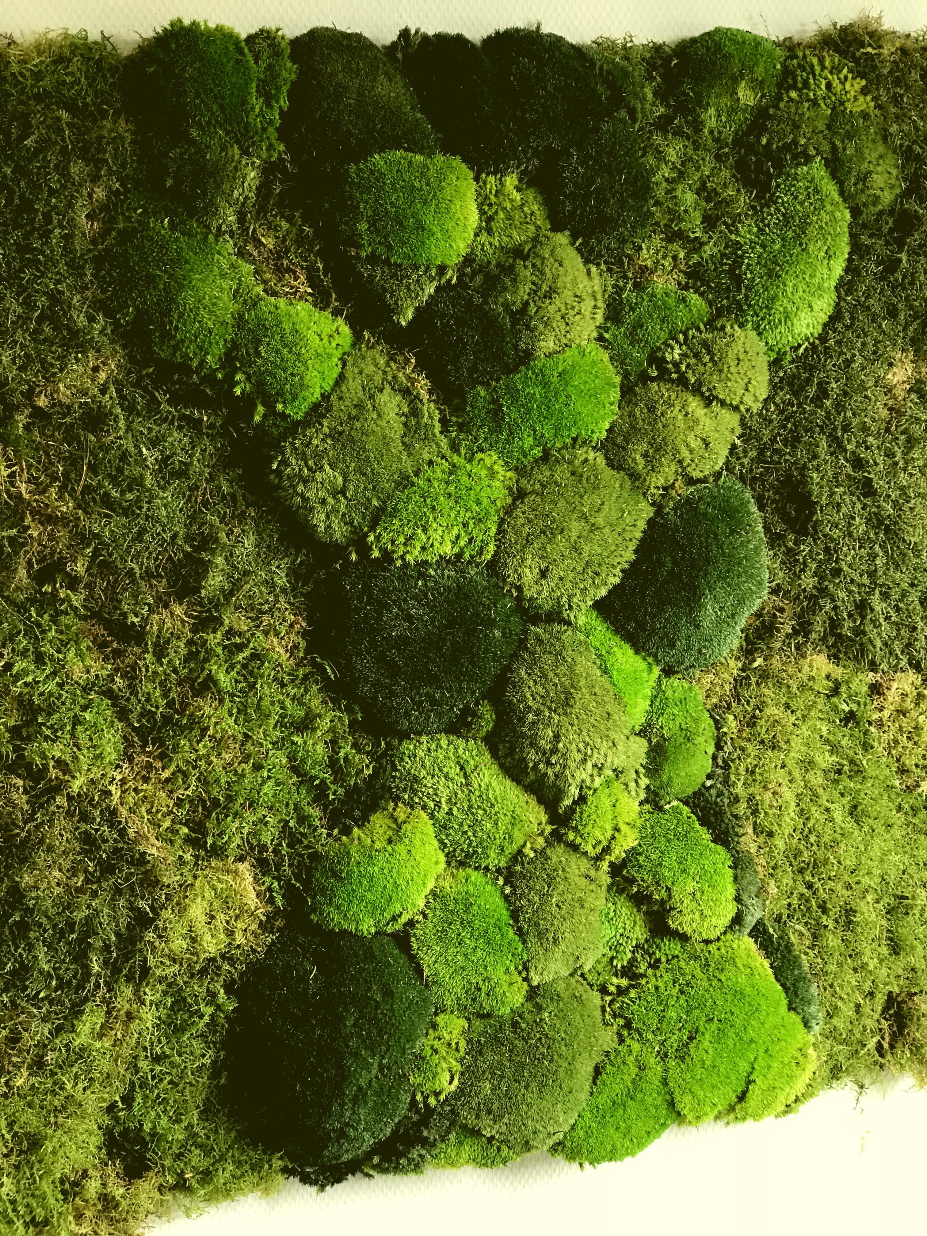 Genoeg Moswand voor uw bedrijf - De Verticale Tuinman - Amsterdam @PA45