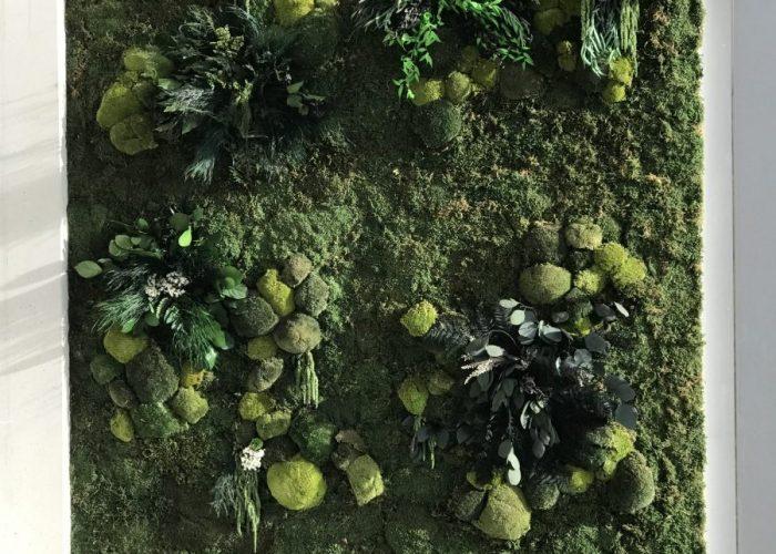 Urban Moss Jungle