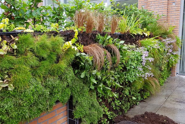 Outdoor Green Wall - Amsterdam 2
