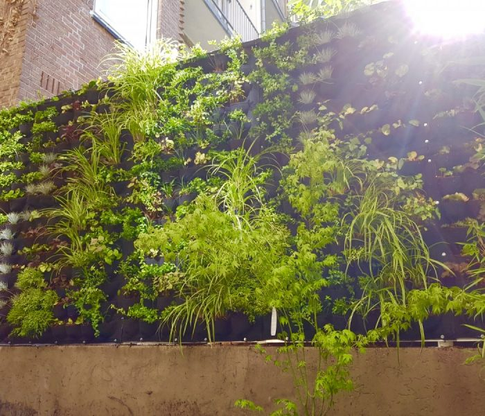 Outdoor Green Wall Spaarndammerstraat