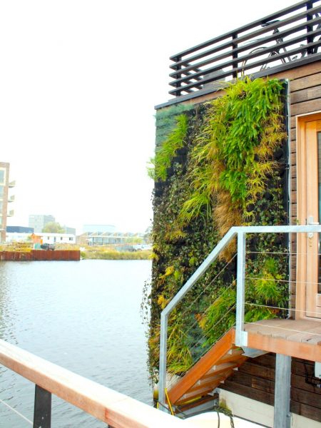 Schoonschip outdoor greenwall