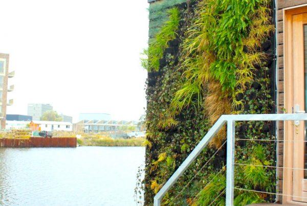Schoonschip outdoor greenwall