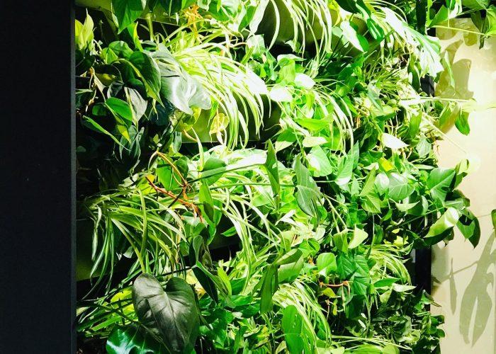 Indoor Greenwall