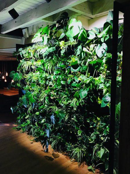 Plantenmuur Bergen