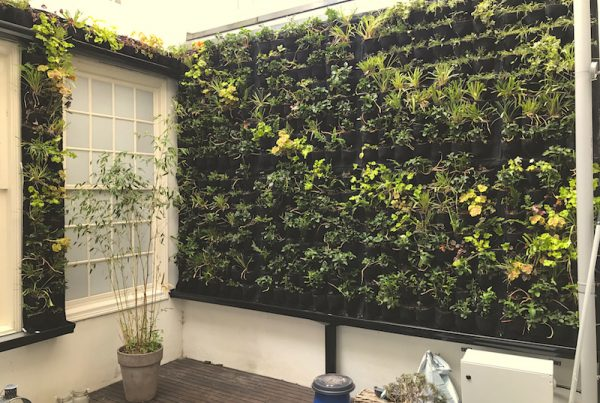 OUTDOOR GREENWALL HERENGRACHT VERTICALE TUIN BUITEN