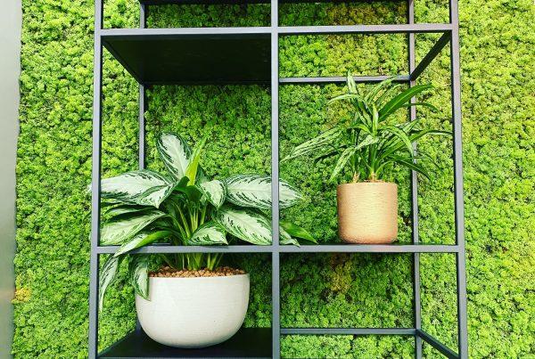 Moswand Rendiermos verticale tuin